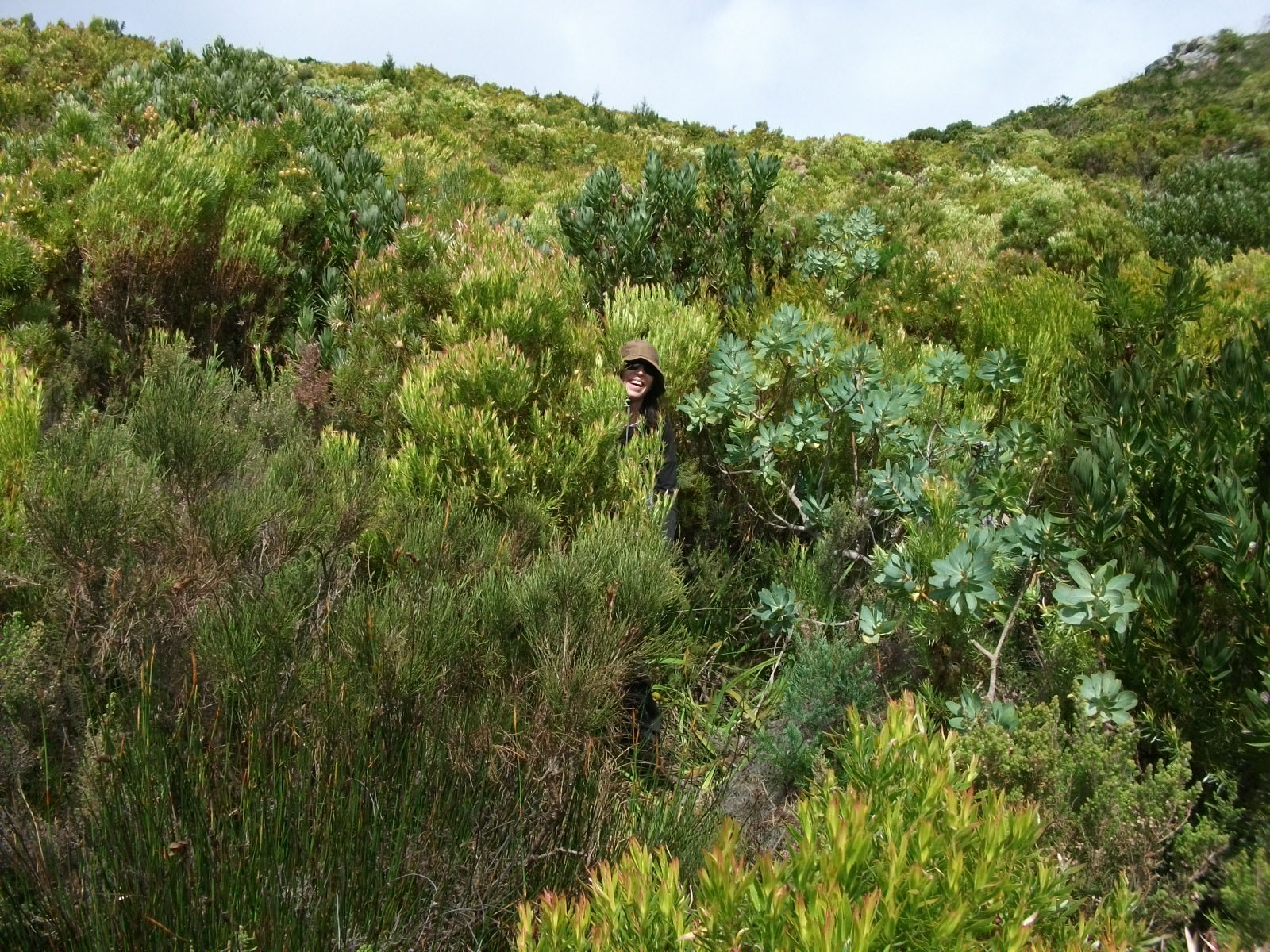 Nita lost in the fynbos!
