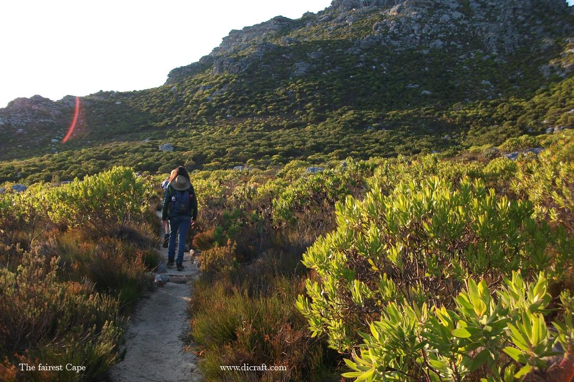 Anita walking in the Silvermine fynbos