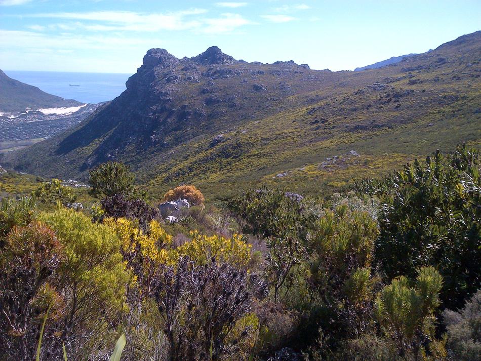 5 The fynbos