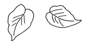 2 Leaf shapes