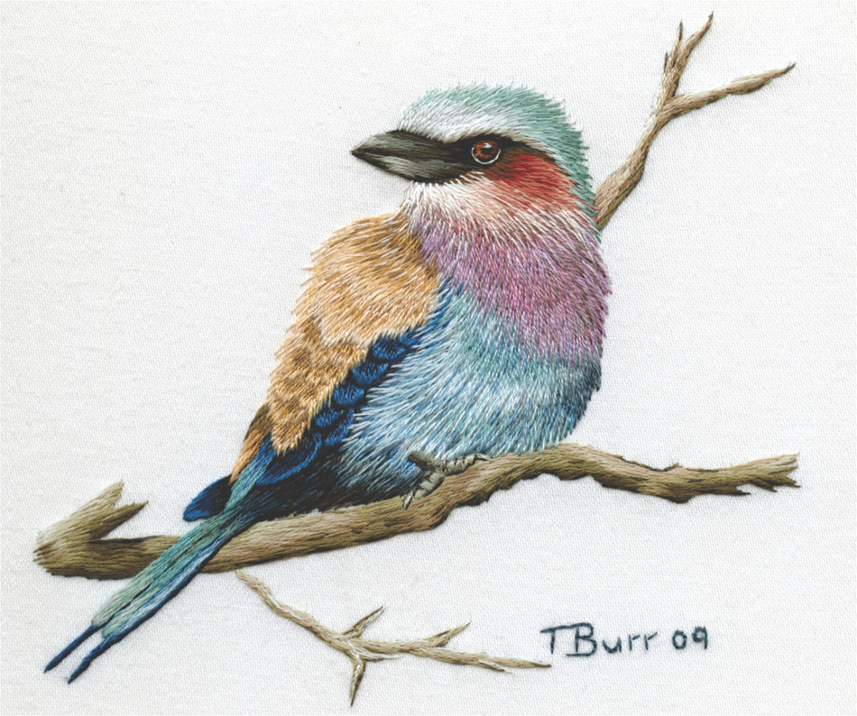 Lilac Breasted Roller 2 by Trish Burr