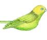 Willow Warbler - a little bird